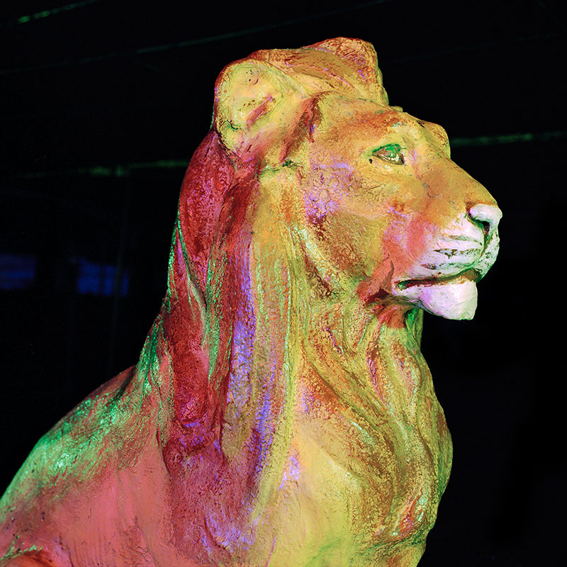 lion.jpeg->description